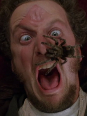 dream interpretation spiders