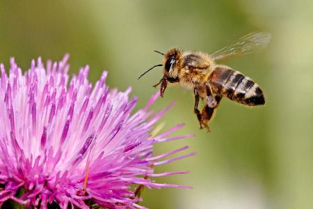 Bee Dream Meaning Bees Dreams Interpret Stung Bee Beehive Swarm