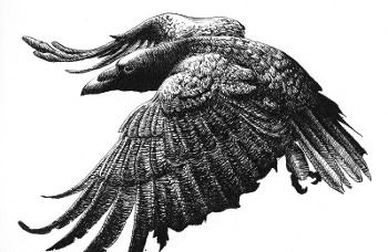Crow dreams interpret meaning and message of crows in dreams for Prophetic meaning of fish